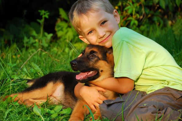How to Choose the Right Breed for You