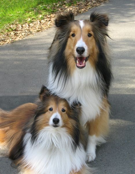Choosing a Male or a Female Dog: What is the Difference