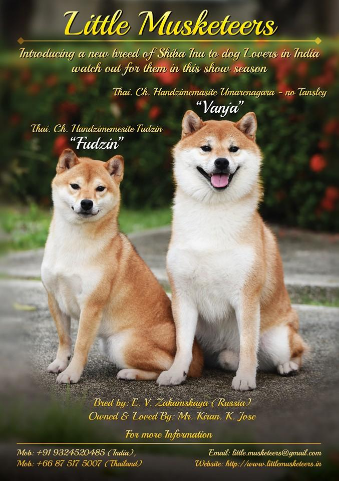 Articles and reviews Pertaining to your Shiba Inu