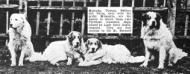 Milanollo Dogs Gallery (~1918)