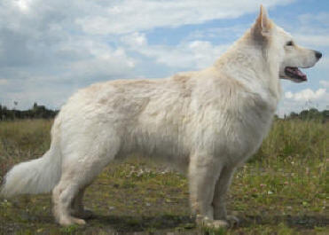 White Wolf O'Connor