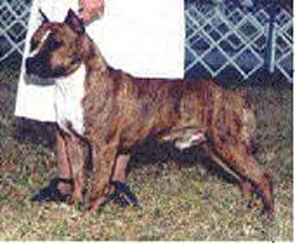 CH.USA Kar Ron Rhapsody's Pal Joey