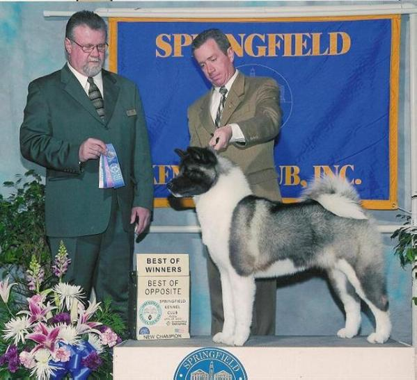 AKC/INT'L/RUS CH Buckridge's Always On My Mind