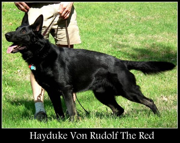 Hayduke Von Rudolf The Red