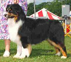 CH (AKC) Hearthside and Terrablues Beauwood