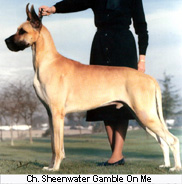 CH Sheenwater Gamble On Me