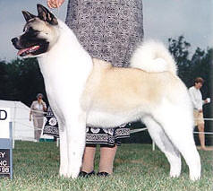 AKC/CAN CH Big Benz Queen Of Denali