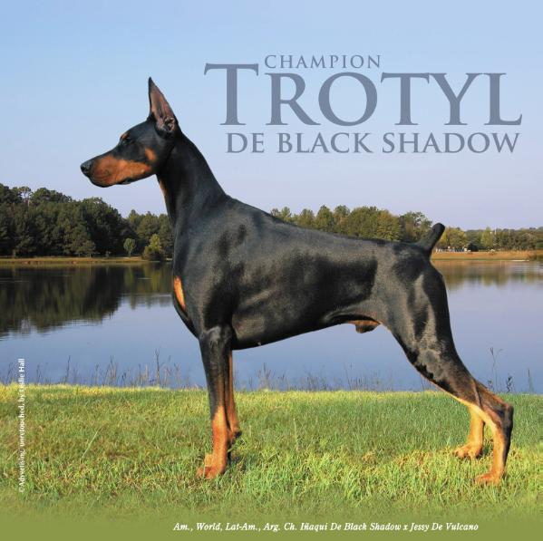 AM. CH. Trotyl de Black Shadow