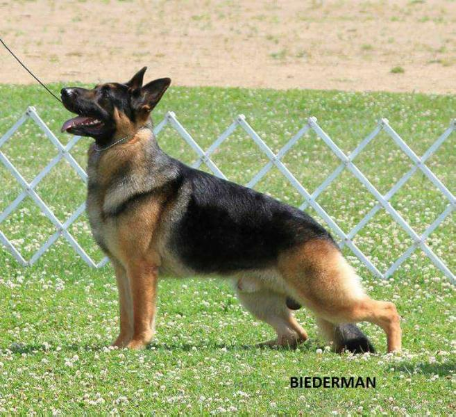 Select Excellent GCH BOF BOM Stuttgart's Single Action Army v Hammersmith