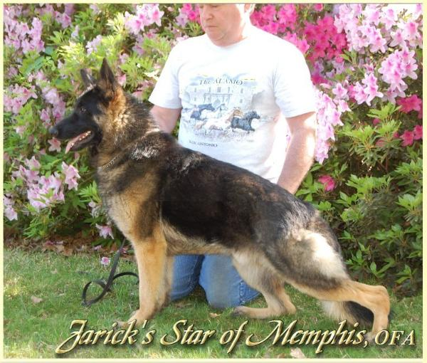 Jarick's Star of Memphis
