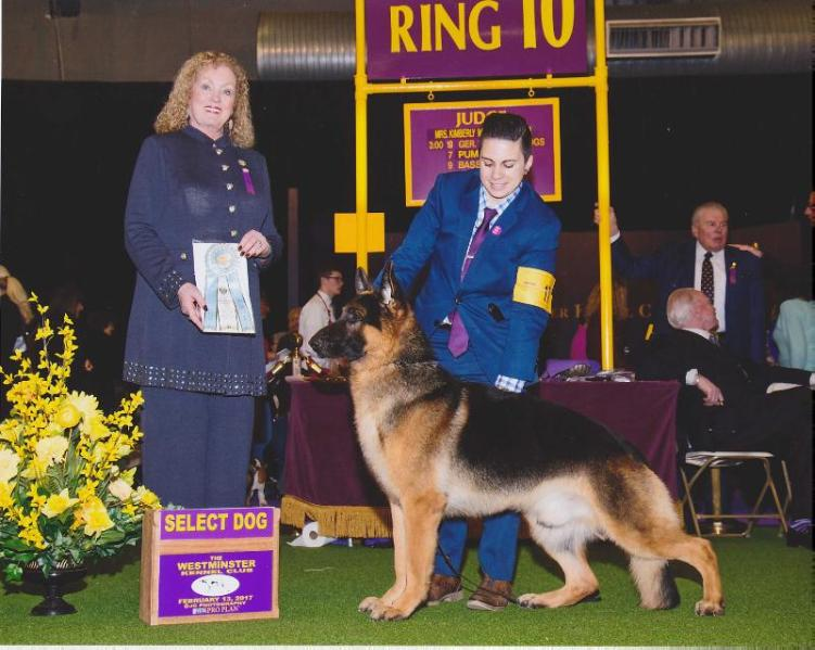 GCH J L Legacy's Gift Of The Magi Melchior