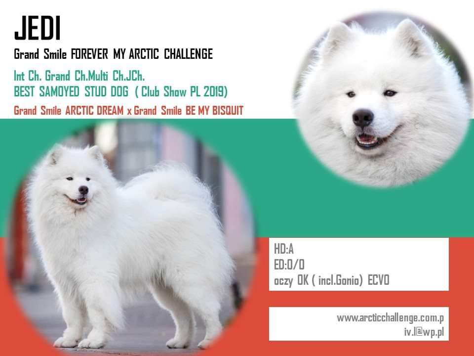 ICh.Multi Ch.Grand Ch.JCh. Grand Smile FOREVER MY ARCTIC CHALLENGE