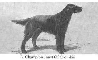 CH Janet of Crombie