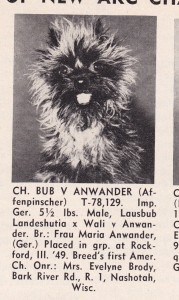 Communication on this topic: How to Identify an Affenpinscher, how-to-identify-an-affenpinscher/
