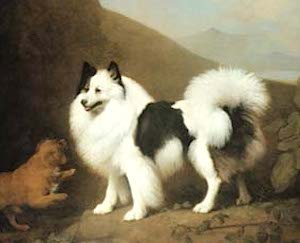 Royal Dog Fino (c.1791) [Property of: The Prince of Whales, George IV]