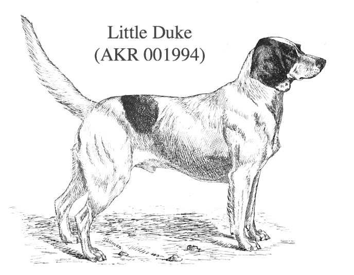 Little Duke (001994)