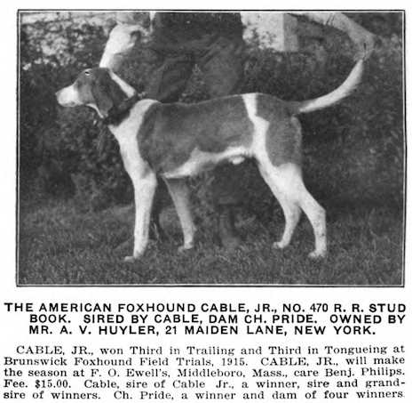 Cable Jr (c.1915) (no. 570 R.R. Stud Book) (Cable x Pride)