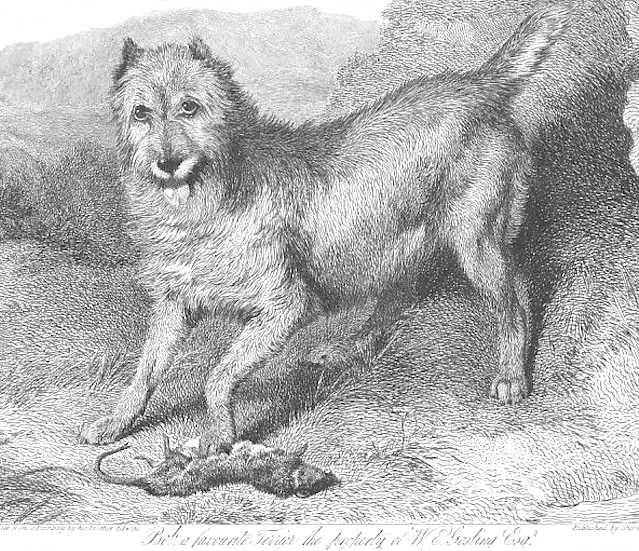 Bob 'a Terrier with a Rat' (c.1825)