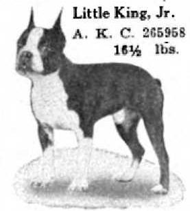 Little King Jr 265958