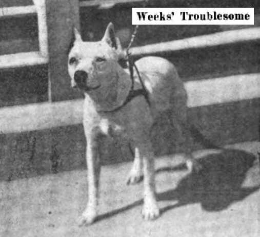 Weeks' Troublesome 107527