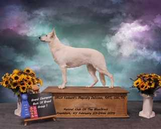 UKC CH Foxhunt Magically Delicious