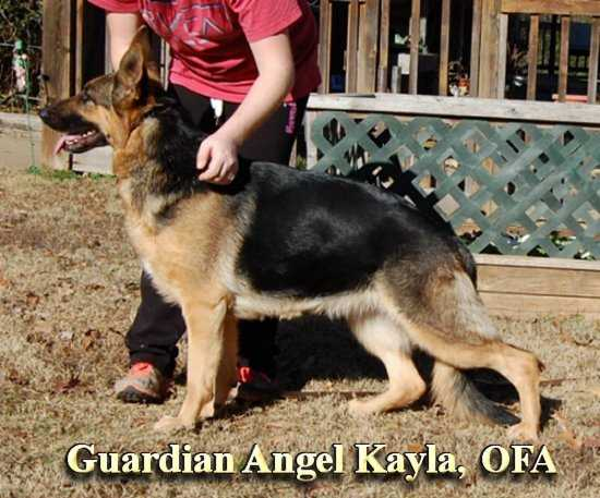 Guardian Angel Kayla