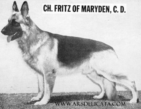 CH Fritz Of Maryden