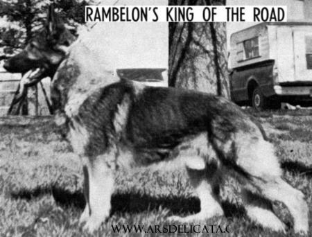 CH (US) Rambelon's King of the Road