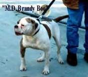 MD Brandy Boo