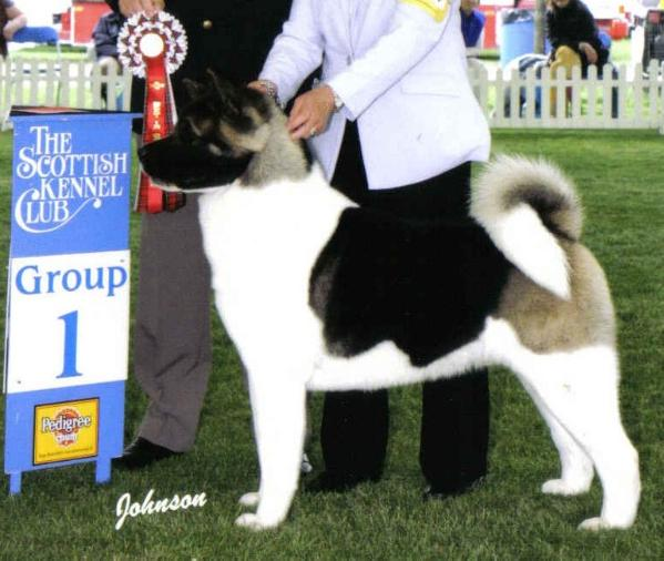 UK/AKC CH Redwitch Heaven Can Wait