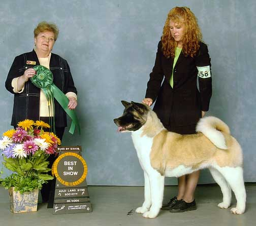 BISS AKC/CAN CH Sondaisa Shiver Shot Stardust