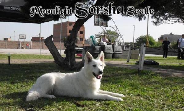 Moonlight Sorsha Scatle