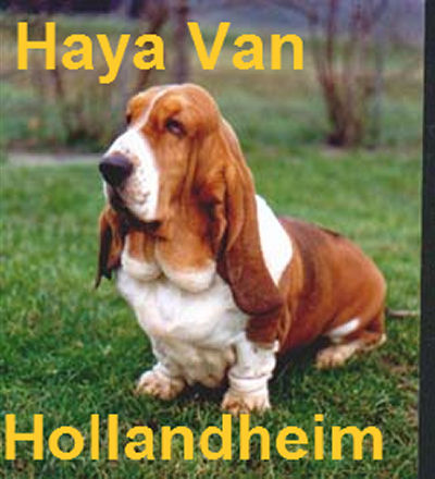 Haya van Hollandheim