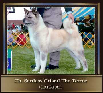 AKC CH Serdess Cristal The Tector