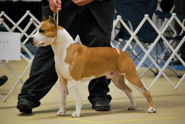 AKC GCH JWW, JEW2010 Alpine's Ring Of Fire